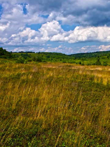 West Virginia: Flora and Fauna of the Dolly Sods
