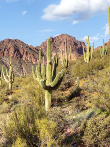 Phoenix Outdoors: Explore the Southwest