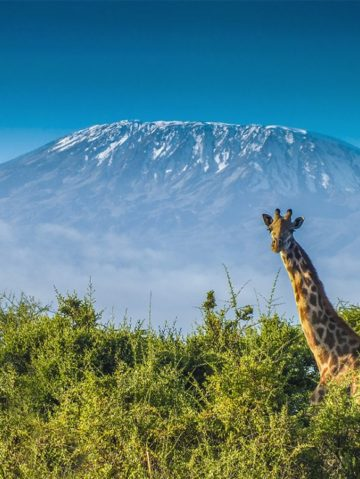 Where to Go On African Safari